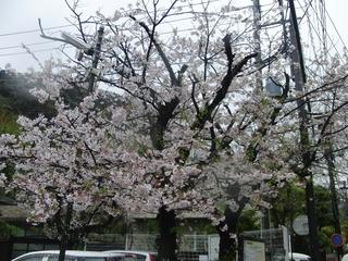 saiyo_20.jpg